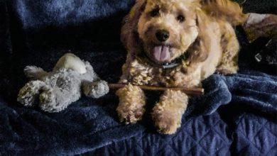 Photo of أهم المنتجات التي ستحتاجها بوجود كلب في منزلك